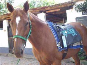 cavallo e bemer vet effettovita